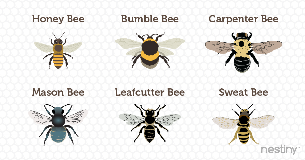 Common US Bees