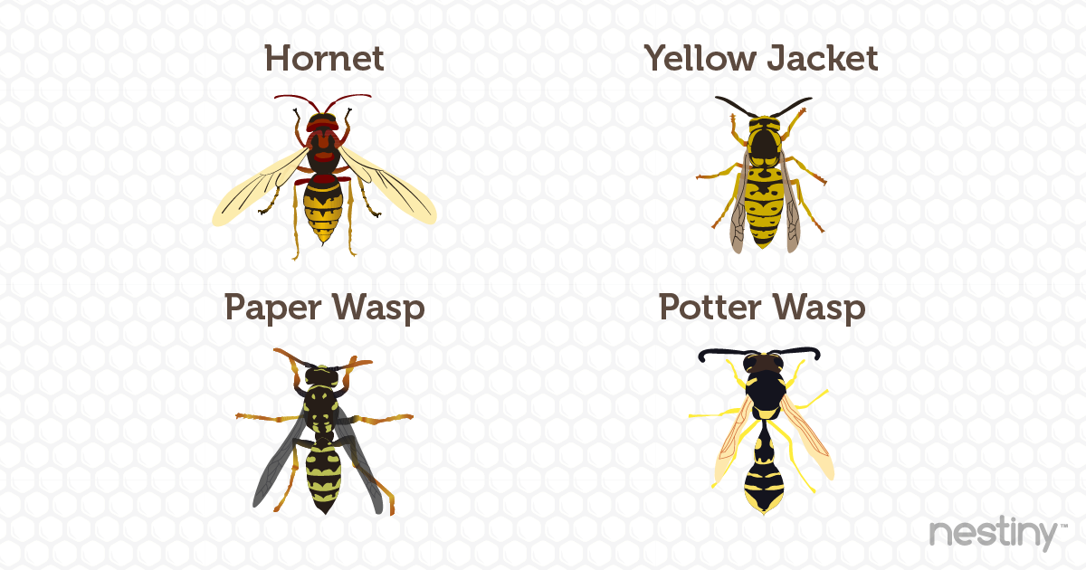 Common US Wasps
